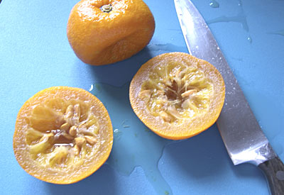 scooping out the inside of poached Seville oranges