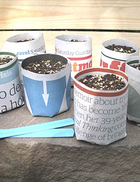 planting seeds in paper pots