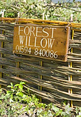 forest willow business card