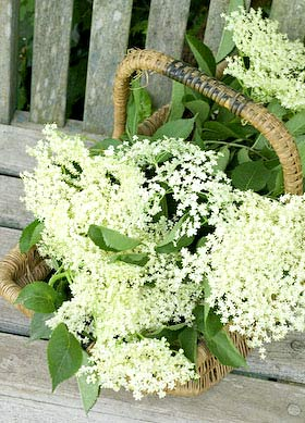 a basket of elderflowers