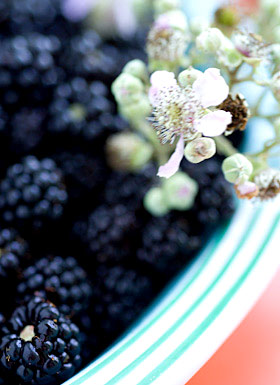 blackberries gathered August 2009