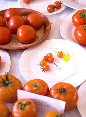 tomatoes on show