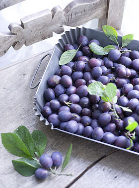 wild damsons