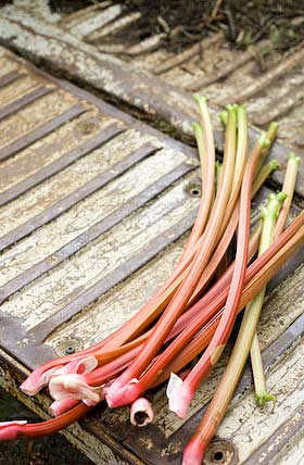 rhubarb for sale in a forest of dean smallholding