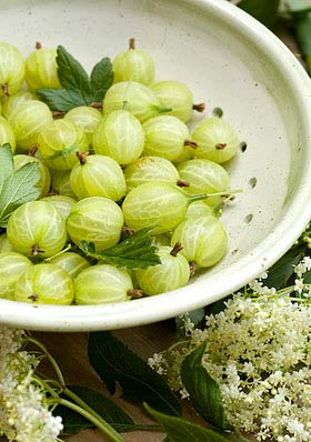 the basic ingredients of an English summer, gooseberries and elderflowers
