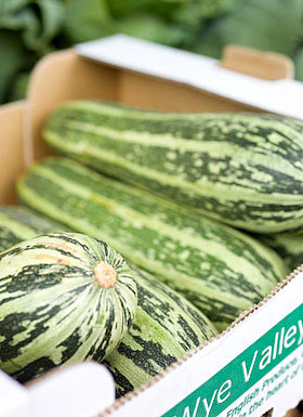 marrows for sale