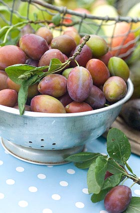 a colander full of plums
