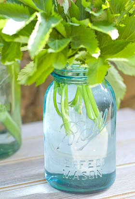 vintage Ball canning jar with angelica