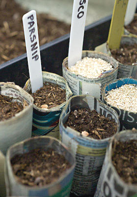 seeds planted in homemade paper pots