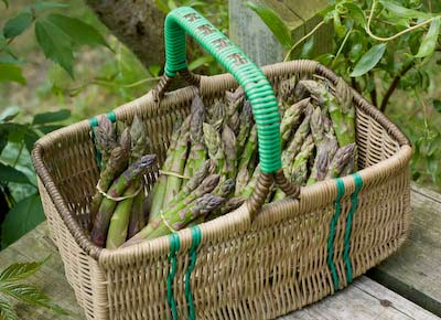 a basket of asparagus spears