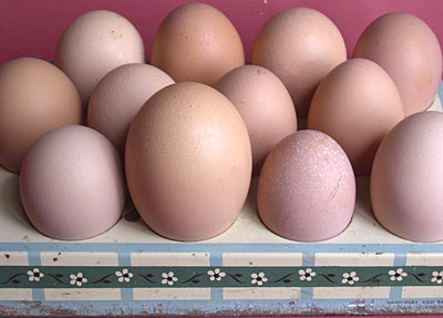free range eggs of all sizes