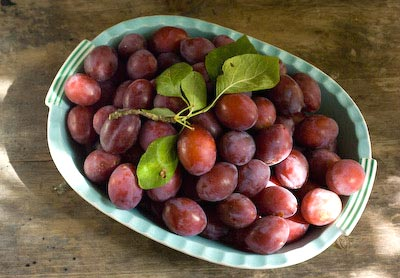 Blaisdon plums picked and ready for jammin'