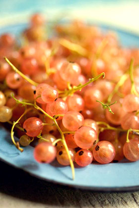 pink currants Gloire de Sablon