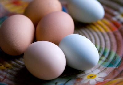 the subtle palette of fresh eggs