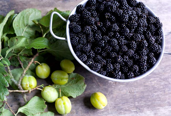 a colander full of foraged blackberries