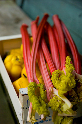 forced rhubarb and a crate of quince